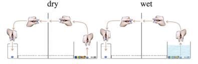 Visualisering av forsøket beskrevet i teksten. Tegning fra originalartikkelen.