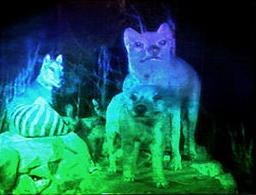 Rainbow_hologram