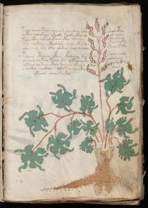 En side fra Voynich-manuskriptet
