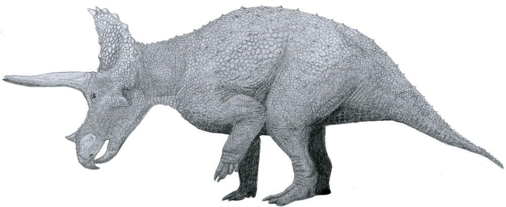 triceratops_by_tom_patker-01